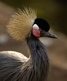 exotic african birds - Google Search