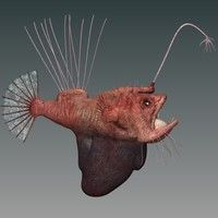 zip Model available on Turbo Squid, the world's leading provider of digital models for visualization, films, television, and games. Fish Sculpture, Sculptures, Deep Sea Creatures, Angler Fish, Deep Sea Fishing, Under The Sea, Frostings, Animals, Monsters