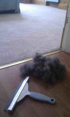Get pet hair out of the carpet with a squeegee.