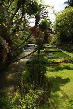 Parque Terra Nostra - Furnas (S. Miguel - Açores)