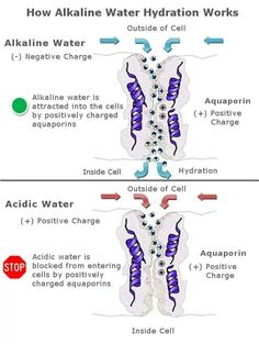 In addition to better hydration, a water ionizer allows the water to act as a powerful antioxidant. You can get more health benefits with a water ionizer. Kangen Water Benefits, Health Benefits, Health Tips, Kangen Water Machine, Ionised Water, Acid And Alkaline, Alkaline Diet, Water For Health, Structured Water