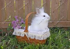 Cute White Furry Baby Bunny Rabbit in a Basket Photo Fine Art Photography Print $14.00 - $50.00