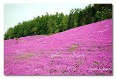 rosa e azul lindas imagens deslumbrantes - Pesquisa Google