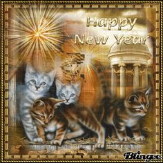 happy new year cats | ... group happy new year funny or cite animals tags kittens happy new year
