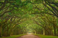 Your ultimate inspiration for things to do in Savannah! See the Savannah Ga points of interest that makes it one of the best Georgia places to visit.: Wormsloe Plantation: Stroll Along the World's Longest Live Oak Avenue