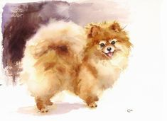 The Pomeranian - Original Watercolor Painting inches Dog Portrait Pets Animals Dog Paintings, Watercolor Paintings, Watercolor Paper, Animals Watercolor, Sheep Dog Puppy, Cute Pomeranian, Cute Dogs And Puppies, Siamese Cats, Dog Portraits
