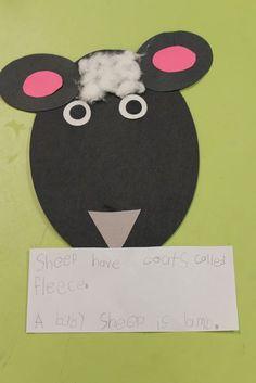 Mrs. Lee's sheep (farm unit)