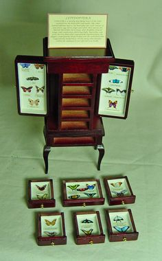 Butterfly Filled Display by uniqueminiatures on Etsy. $120.48, via Etsy.