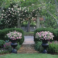 1000 Images About P Allen Smith On Pinterest Allen