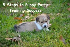 8 Steps to Puppy Potty Training Success – Project Pawsitivity Potty Training, Training Your Dog, Puppy Crate, Dog Potty, Puppy House, Pet Dogs, Pets, Dog Care, Dog Owners