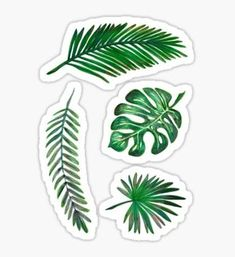"""Leaf Set"" Stickers by kopfabhase Bubble Stickers, Cool Stickers, Printable Stickers, Laptop Stickers, Cactus Stickers, Journal Stickers, Planner Stickers, Image Tumblr, Tumblr Png"