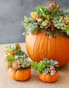 DIY-Pumpkin-Succulent-Harvest-Decoration