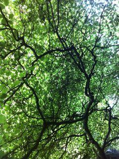 Woods in bunclody