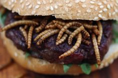 Rentokil stunt. Ew. - Creepy crawlies worm their way onto plates at pop-up 'pestaurant'