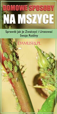 Asparagus, Diy, Gardening, Balcony, Bricolage, Lawn And Garden, Handyman Projects, Do It Yourself, Fai Da Te