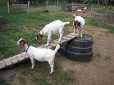 Goat Play Area | BackYardHerds Forum / goat play areas