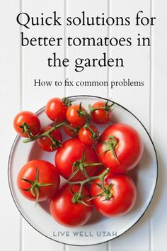 Wonderful Tomato Dishes: Over 55 Recipes for Amazing Tomato Breakfasts, Appetizers, Salads, Tomato Soups, Desserts and Drinks Freezing Tomatoes, Growing Tomatoes, Green Tomatoes, Growing Vegetables, Appetizer Salads, Appetizers, Tomato Growers, Tomato Dishes, Tomato Soups