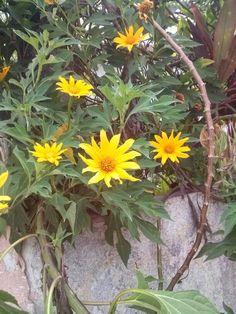Flores no muro