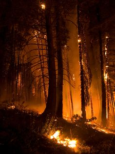 The Springs Fire, Banks-Garden Valley, Idaho, Bois Orange Aesthetic, Aesthetic Gif, Tattoo Mutter, Fire Image, Wild Fire, Story Inspiration, Idaho, Banks, Scenery