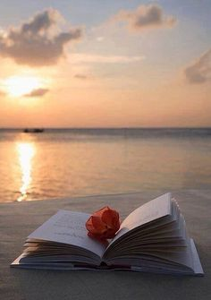 Coco Palm Bodu Hithi Resort in Maldives reading at the beach and a sunset --> paradise.reading at the beach and a sunset --> paradise. I Love Books, Good Books, Foto Portrait, Book Flowers, Maldives Resort, Photo D Art, Book Photography, Belle Photo, Serenity