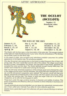 Zodiac Unlimited Aztec astrology postcard: The Ocelot Egyptian Mythology, Egyptian Symbols, Astrology Zodiac, Zodiac Signs, Mayan Astrology, Aztec Symbols, Aztec Culture, Aztec Warrior, Libra