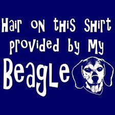 Shedding beagle.