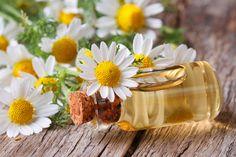 """As flores da camomila são usadas para diversos fins medicinais e para fazer chá. Também são usadas junto à seus óleos essenciais na preparação de algumas bebidas alcoólicas (licores, vinhos e cervejas), doces (balas, gomas de mascar, sorvetes, etc.) e em vários produtos de higiene e beleza (shampoos, sabonetes, pastas de dente, etc.). Acesse blog.plantei.com.br, digite """"Como plantar camomila"""" na barra de busca e saiba como cultivar esta formosinha planta. 🌸😍"""