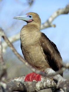 Animals of the Galápagos. - Images Photo Gallery