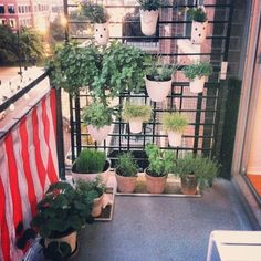 Balcony serie by Small Space Gardening, Gardening Tips, Urban Gardening, Balcony Gardening, Balcony Railing Planters, Bistro Set, Garden Club, Tropical Plants, Vegetable Garden