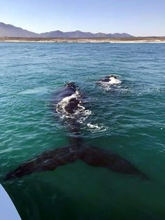 Whale Watching Gansbaai
