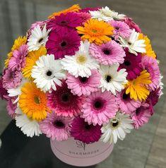 Happy Flowers, Flower Arrangements, Plants, Flowers, Floral Arrangements, Plant, Planets
