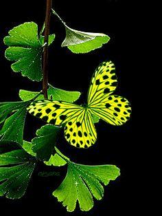 Bloem en vlinder