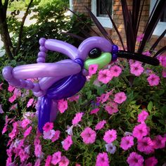 Day 302: Hummingbird | 365 Days of Balloons