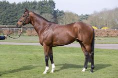 TORONADO'S sire High Chaparral had multiple Group winners in both Hemispheres with leading contenders in Derby & Oaks