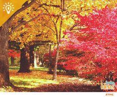 O outono é ideal para realizar podas de limpeza e manutenção, onde se retira os galhos secos e com folhas mal formadas (mas nunca pode as plantas que florescem no inverno).