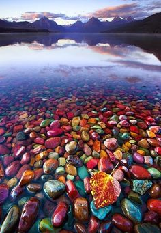 8+Pebble+Shore+Lake+in+Glacier+National+Park+Montana.jpg 540×781 pixels
