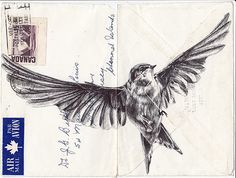 My Paisley World: Mark Powell's Bird Drawings http://mypaisleyworld.blogspot.com/2013/11/mark-powells-bird-drawings.html