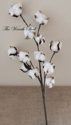 """19"""" Natural Cotton Boll Spray, Natural Cotton Bolls, Wedding Decor, 2nd Anniversary Gift, Hand Wrapped Stems, Raw Cotton, Cotton Home Decor"""