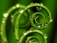 Fern with raindrops