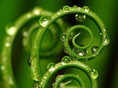 unfurling - more spirals in nature