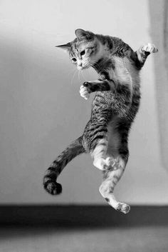 Funny Animal Pictures, Funny Animals, Funny Cats, Cute Animals, I Love Cats, Cool Cats, Beautiful Cats, Animals Beautiful, Kittens Cutest