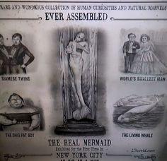 mermaids new evidence 2013   ... Barnum Real Mermaid Flyer (Animal Planet - Mermaids The New Evidence
