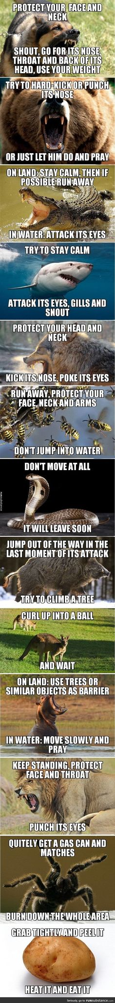 Funny lol -- Survival tips Daily Funny jokes Survival Life Hacks, Survival Tips, Survival Skills, Outdoor Survival, Survival Stuff, Outdoor Camping, The More You Know, Good To Know, Wilderness Survival