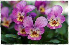 Suvikumpu Flowers, Plants, Florals, Planters, Flower, Blossoms, Plant, Planting