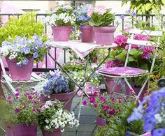 Color Garden
