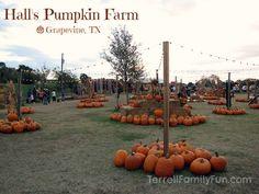 Hall's Pumpkin Farm, Grapevine TX
