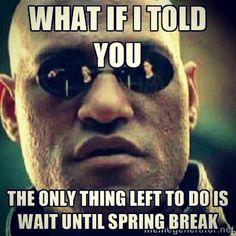 18 Best Spring Break Memes Images In 2017 Funny Phrases Haha