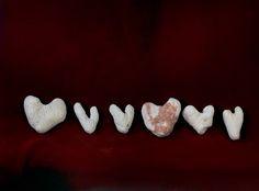 Fiona Pardington  6 Hearts Rarotonga