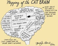 Cat Nipped Dream | This is so true!!