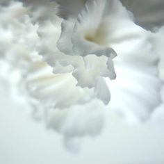 07:28 #photo #photography #picture #flowers #flowerslovers #flowerzdelight #ig_flowers #flowersofinstagram #flowerstalking #softfocus #flowersandmacro #pasandha__flowers #macrophotography #naturelover_gr #tv_flowers #ig_japan #ig_artistry #jj_onlywhite #mastersofwhiteness #macro_freaks #macroclique #fs_light #macro_spotlight #panasonic #lumixg6 #sigma #great_flowers #tv_closeup #japan #sapporo